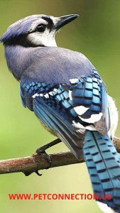 Birds-Category - Pet-Connection