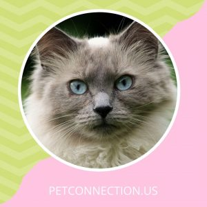 Cat Category - Pet Connection