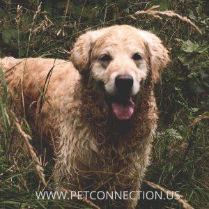 category-dog