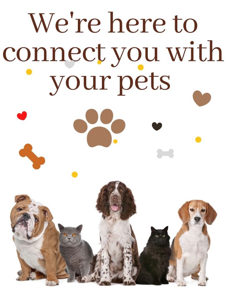 Pet-Connection - Here-to-connect-you-with-your-pets