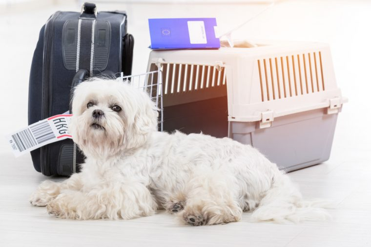 The-Definitive-Guide-On-Pet-Travel-To-The-EU-Post-Brexit