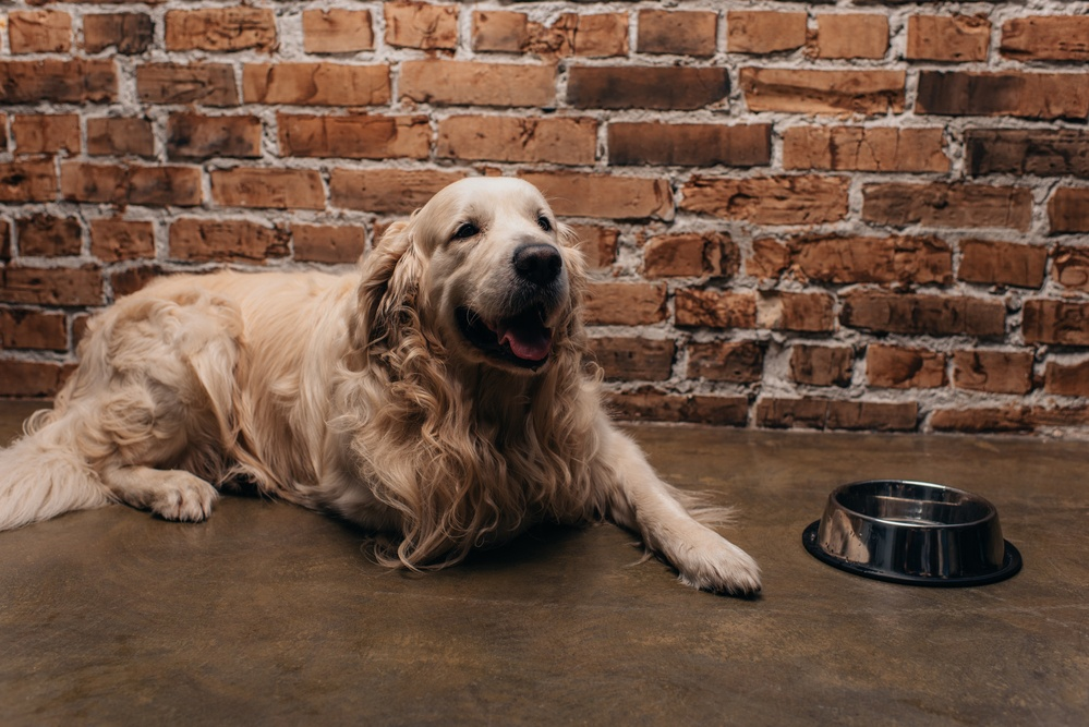 best-dog-food-for-allergies-pet-connection-worldwide